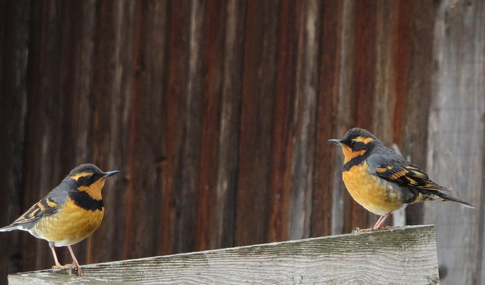 Vögel, Begegnung, Natur, Gespräch