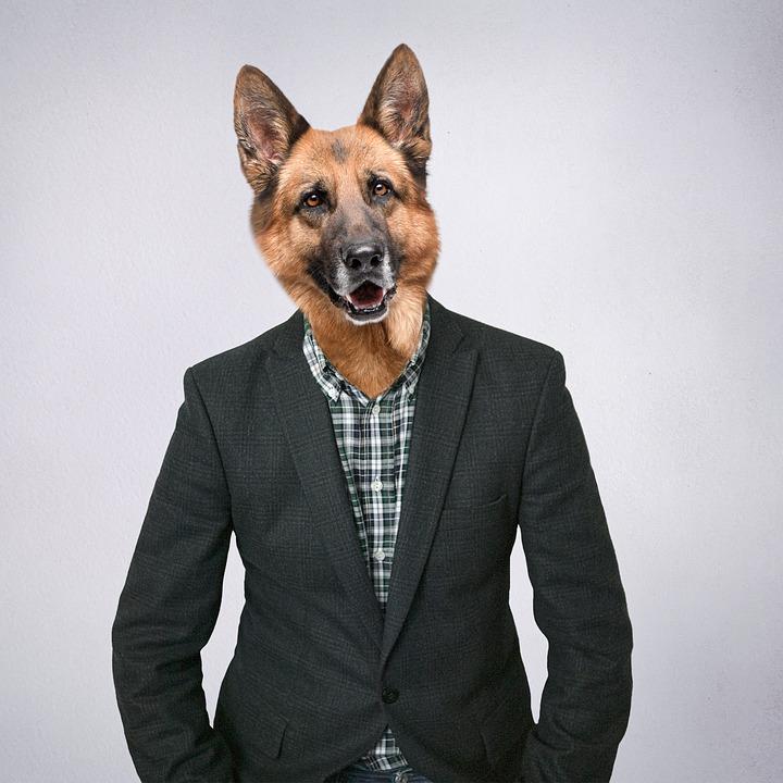 Pastor Alemán, Pastor, De Raza Pura, Perro En Ropa, humanizar animales