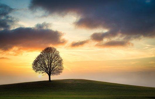 空, ツリー, フィールド, 日没, 雲, 丘, 牧草地, 単一の|アインの集客マーケティングブログ