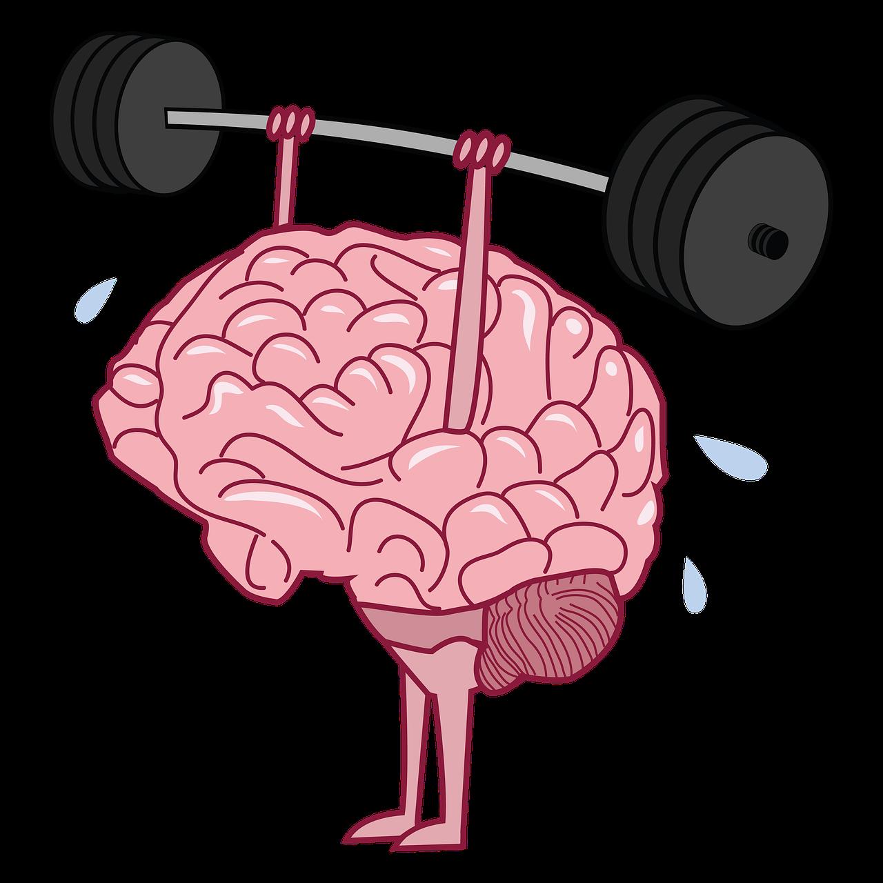 Brain Exercise Training Common - Free image on Pixabay