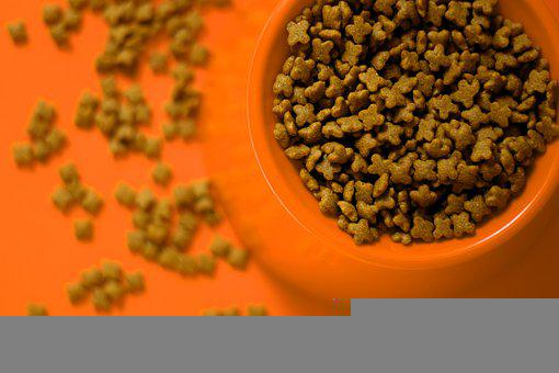 Dierenvoeding, Huisdier, Voedsel, Hond