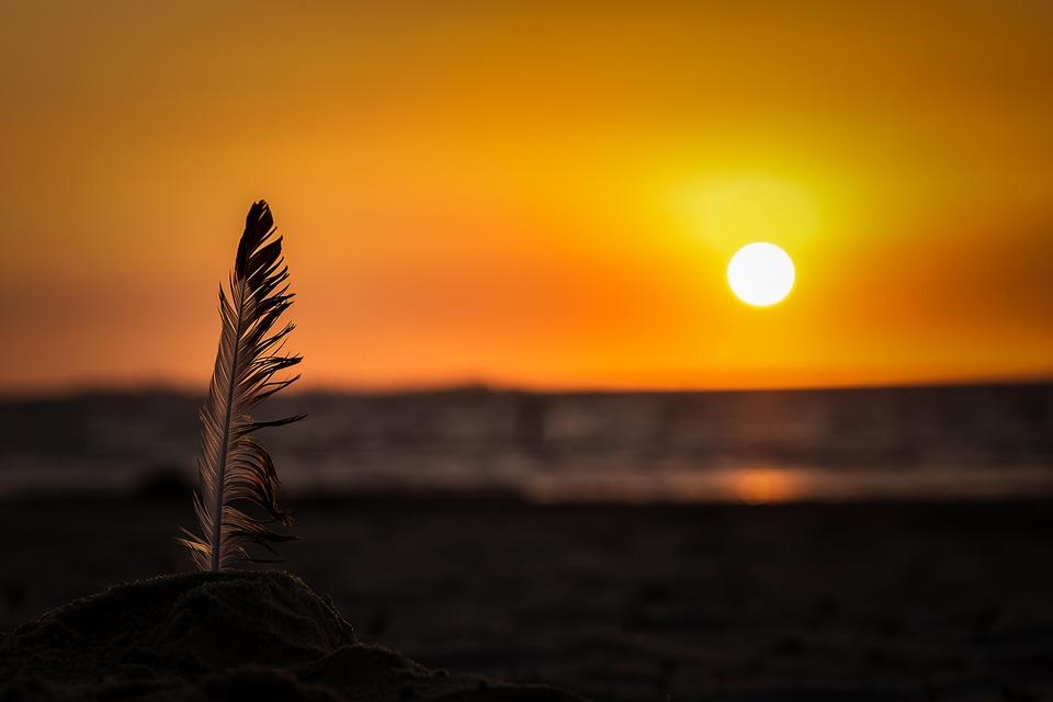 Feather, Sunset, Beach, Sun, Dusk, Twilight