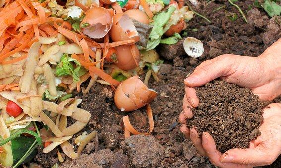 Compost, Ecology, Waste, Garden, Nature