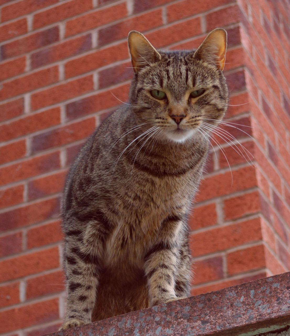 Kucing Licik Potret   Foto gratis di Pixabay