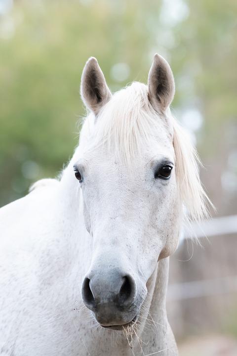 Kuda Poni Hewan Australia Foto Gratis Di Pixabay