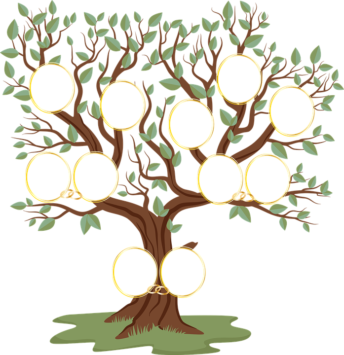 Family Tree, Genealogical Tree, Genealogical Table