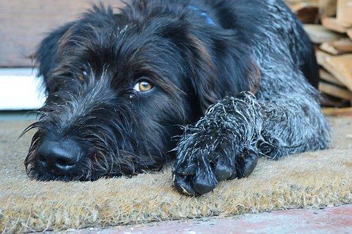 Dog, Black, Adorable