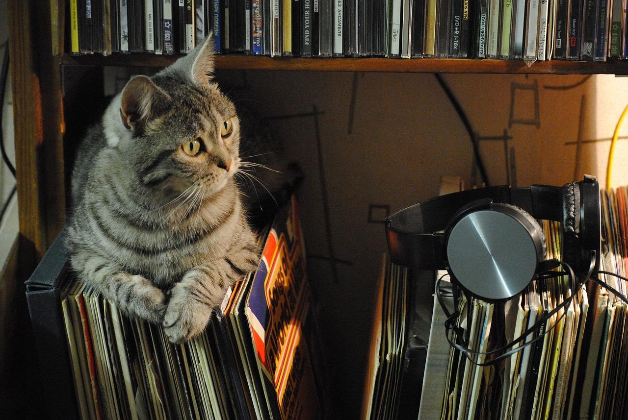 Chó mèo có cảm nhận được âm nhạc?