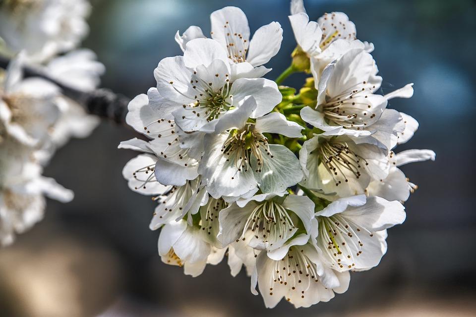 Красивые фото - Страница 2 Flowers-6148258_960_720