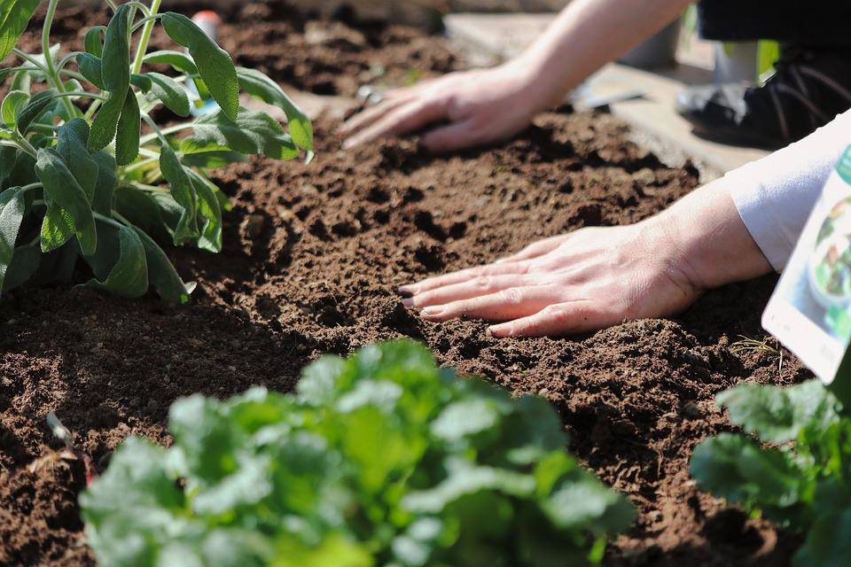Plant, Hands, Gardening, Soil, Sowing, Planting, Hobby