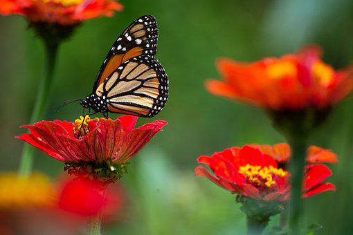 Butterfly, Flowers, Insects, Petals