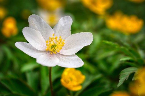 Kukka, Kevät, Luonto, Kasvisto, Tausta