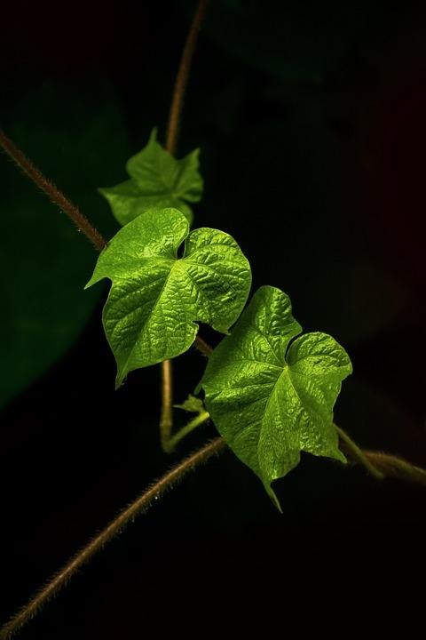 Green Leaves in Dark | Free Photo in Pixabay