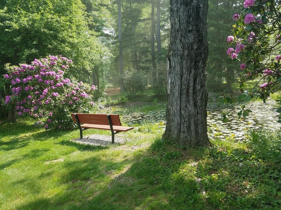 Park, Park Bench, Public Park, Rhododendrons