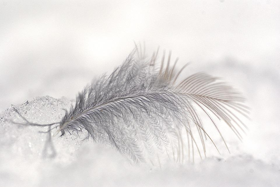 Feather, Ice, Snow, Plume, Bird Feather, Soft, Nature