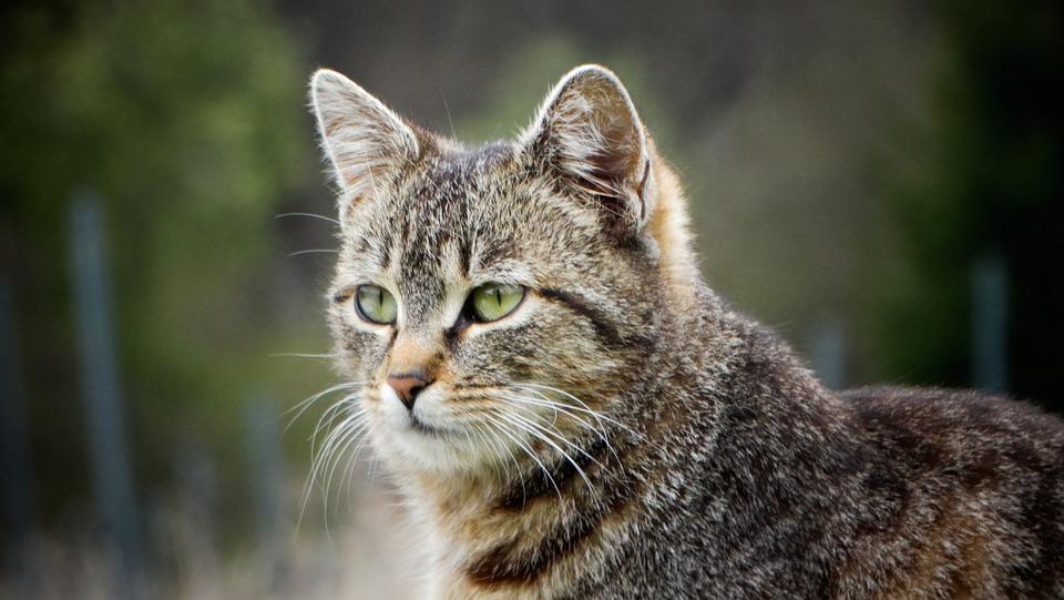 Красивые фото - Страница 2 Cat-6188095_960_720