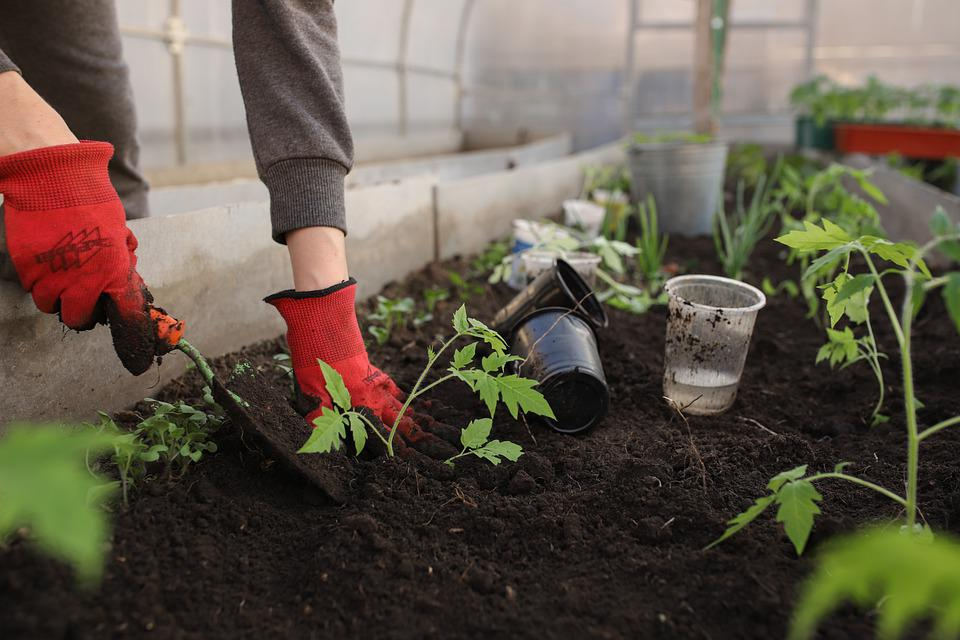Serre, Planting, Le Printemps, Des Lits, Femme, Fille