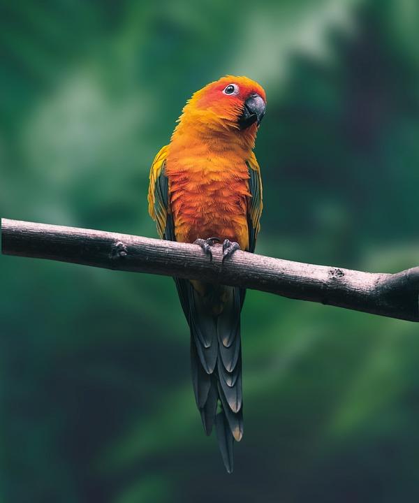https://cdn.pixabay.com/photo/2021/05/08/17/05/parrot-6238905_960_720.jpg