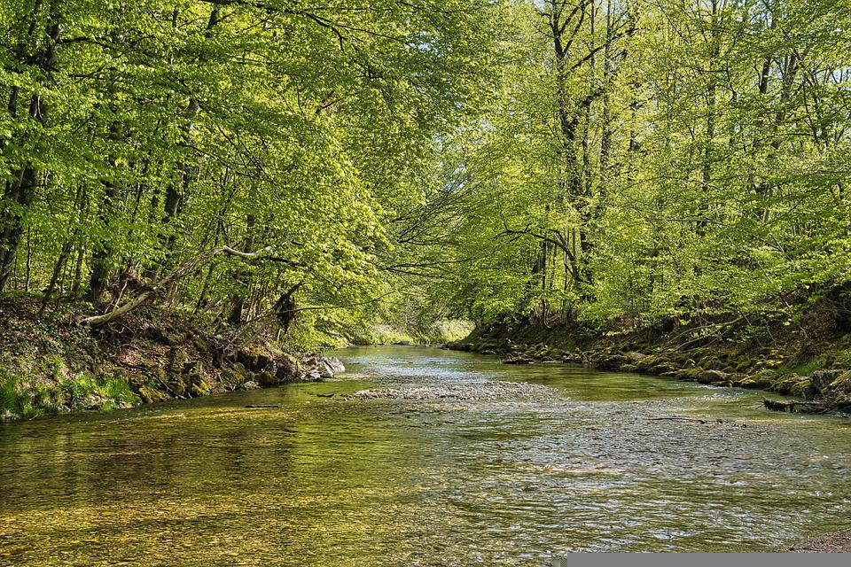 Forest, Trees, River, Spring, Watercourse, Water, Creek