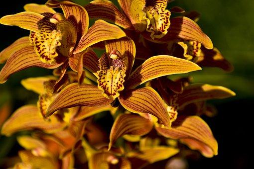 Orchids, Flowers, Plant