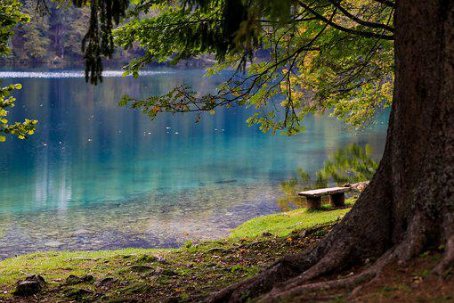 Lake, Forest, Park, Bench, Tree, Wood