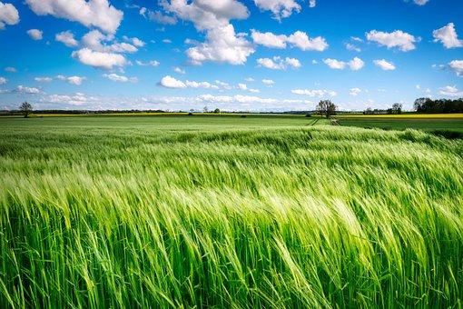 フィールド, 草, 農村, 牧草地, 風, ファーム, 農地, 耕作地, 農業|アインの集客マーケティングブログ