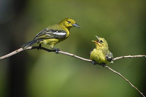 Birds, Fledgling, Feeding