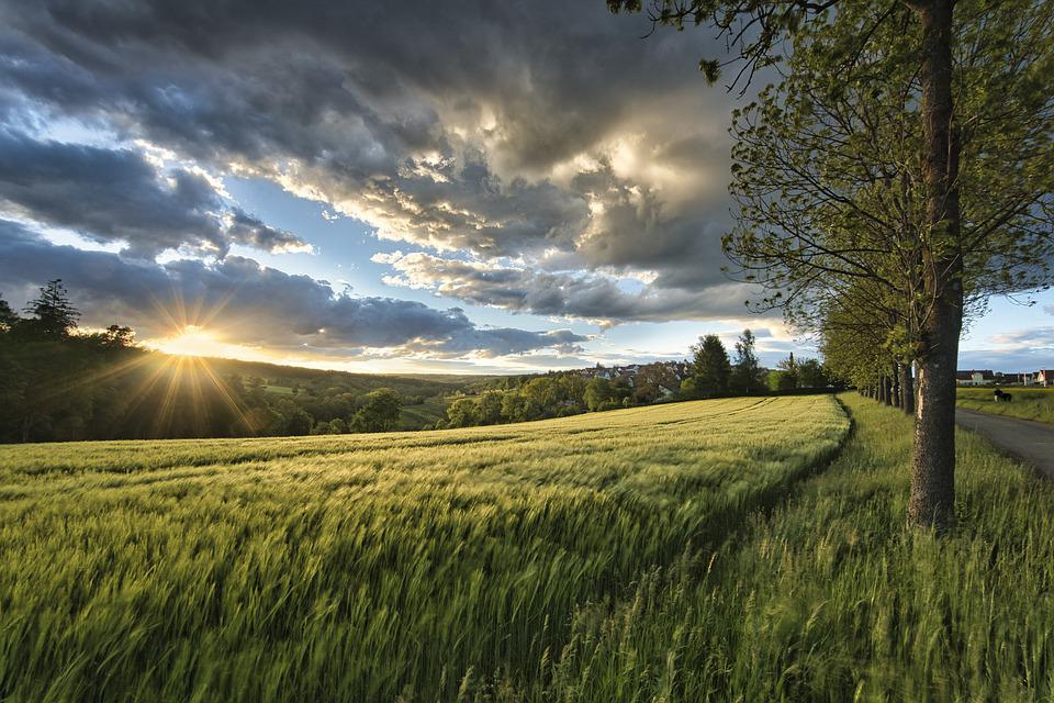 Zachód Słońca, Łąki, Trawa, Światło Słoneczne, Zbóż