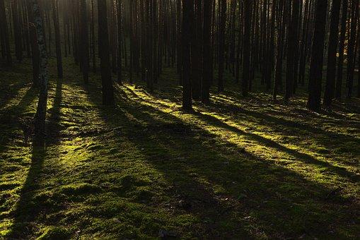 Forest, Tree, The Sunlight, Dark