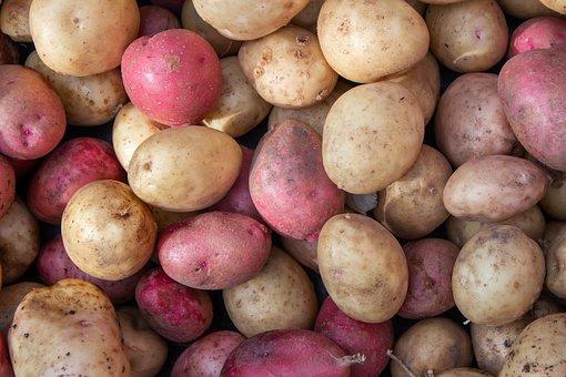 Potatoes, Vegetable, Food, Harvest