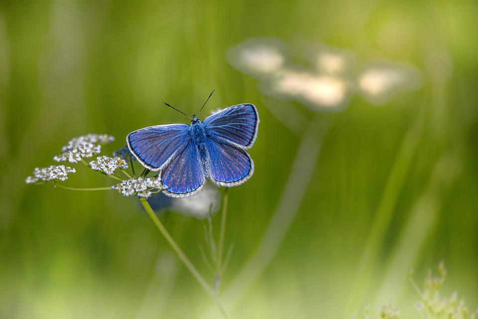 butterfly,stockholm,lahealila,
