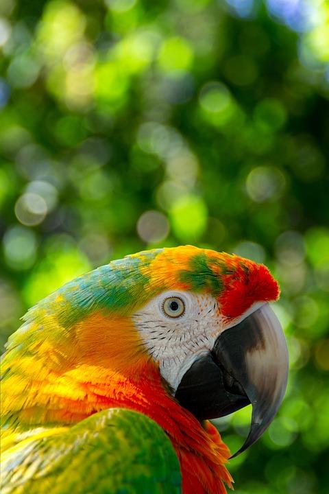 https://cdn.pixabay.com/photo/2021/07/22/01/01/parrot-6484206_960_720.jpg