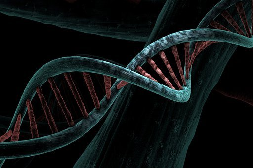 Dna, Biological, Helix, Analysis, Study