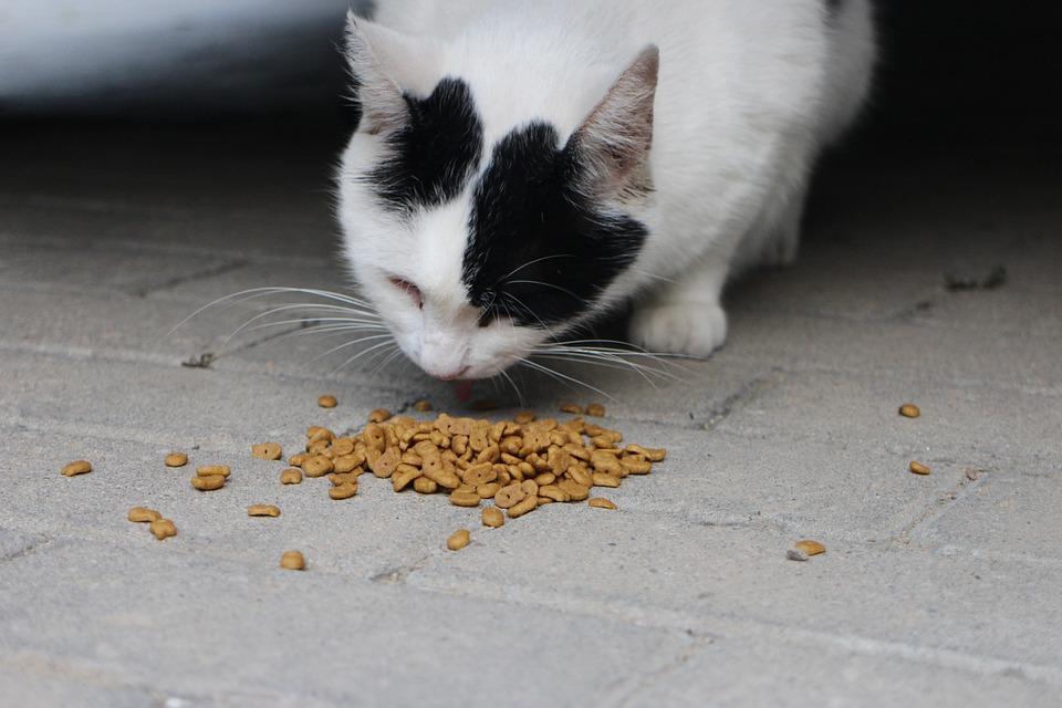 Cat, Eating, Cat Food, Pet, Animal, Domestic Cat