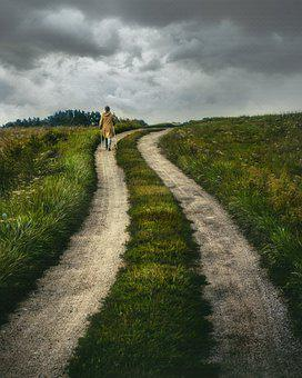 Path, Rural, Nature, Road, Countryside