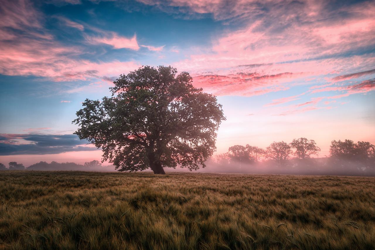 field, morning, sunrise #6574455 w salonie