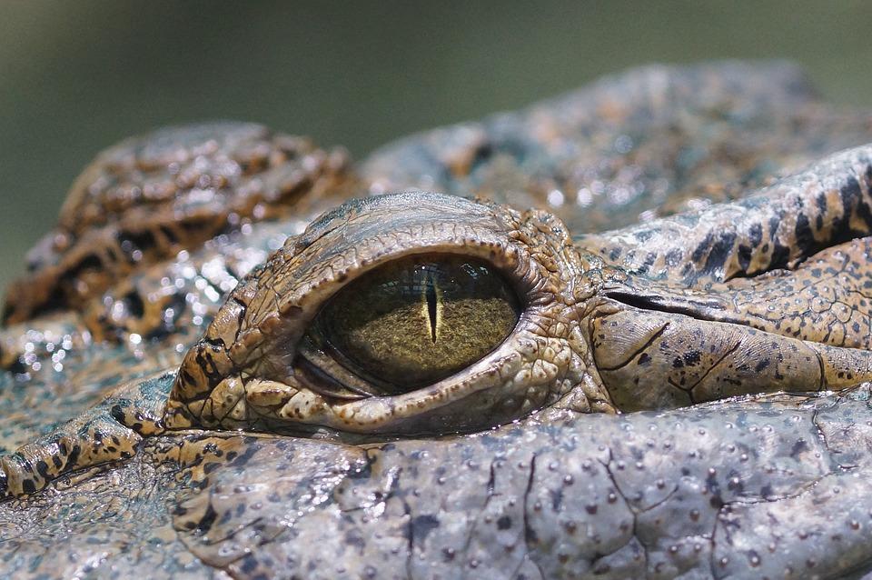 Mammallike Reptiles
