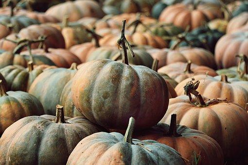 Pumpkins, Pumpkin Patch, Harvest