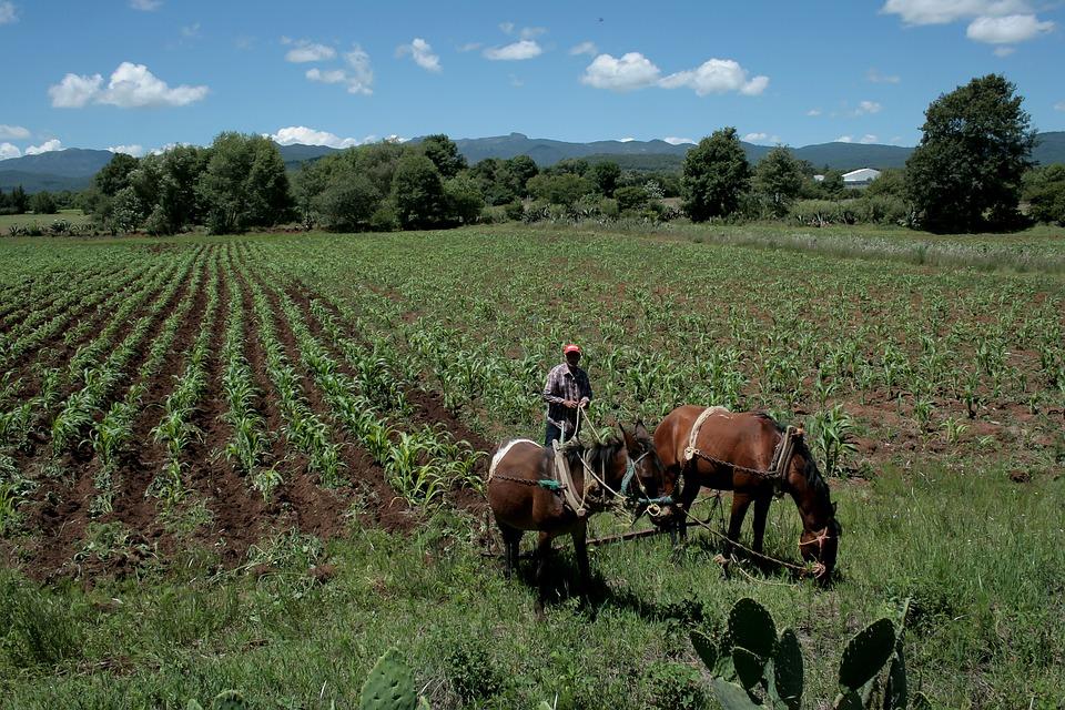 Gebied, Landbouw, Boer, Boerderij Paarden, Trekpaarden
